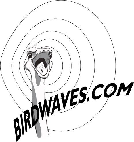 Tony Jillson / Birdwaves Media